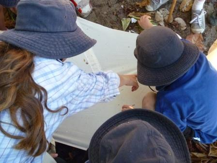 NEW! Science Year Seven (Water Units) Excursion program