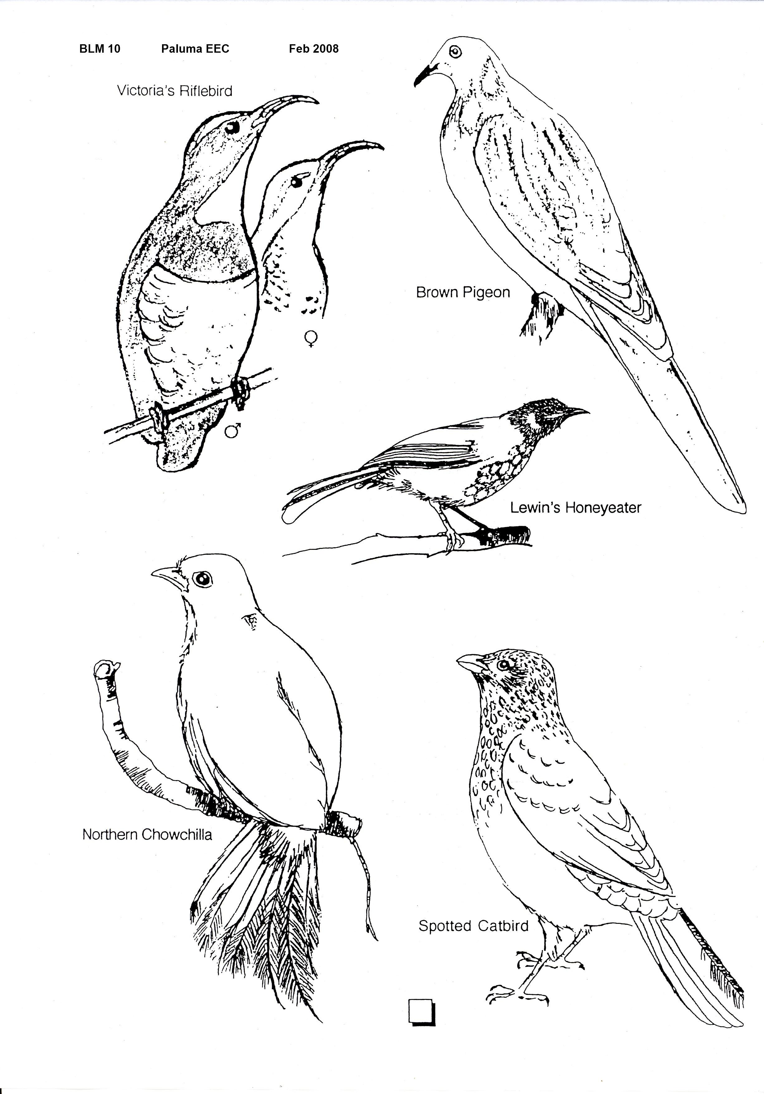 Documents blm 010 blm 010 rainforest birds seen at paluma pooptronica